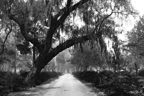 Bonaventure Cemetery Art Print featuring the photograph The Road Home by Rick Wilkerson