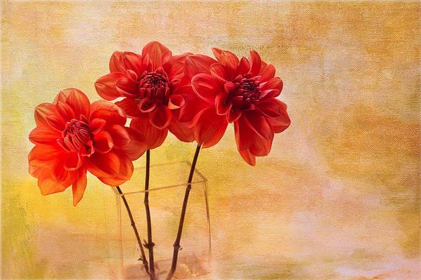 Dahlias Art Print featuring the photograph Three Orange Dahlias by Rebecca Cozart