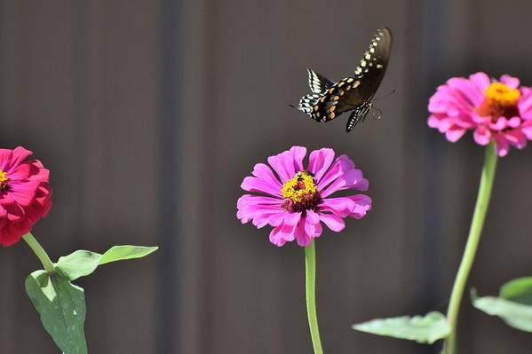 Flower Art Print featuring the photograph Todays Art 1417 by Lawrence Hess