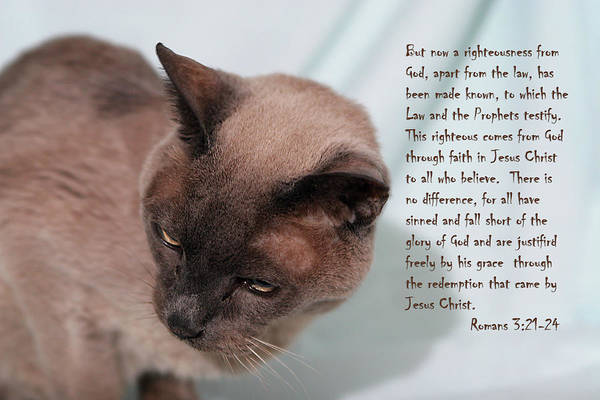 Scripture Art Print featuring the photograph Tonkinese Cat Romans 3 V 21-24 by Linda Phelps