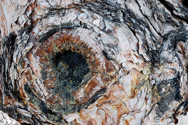Tree Bark Art Print featuring the photograph Tree Bark by Apurva Madia