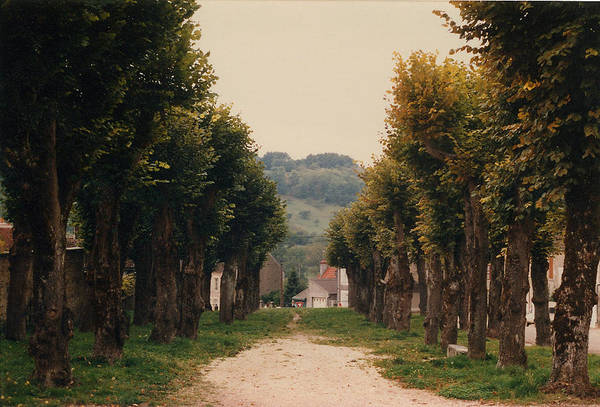 Trees Art Print featuring the photograph Tree Lined Pathway In Lyon France by Nancy Mueller