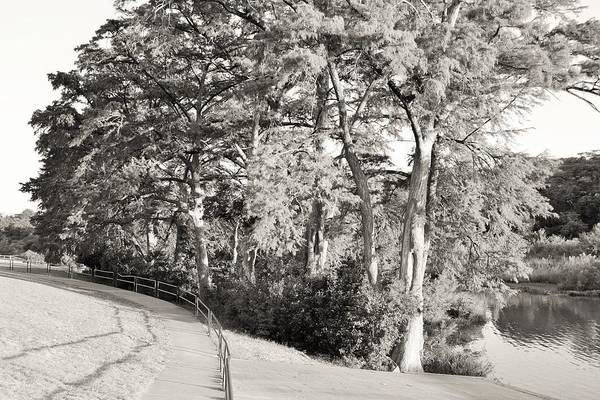 Black Art Print featuring the photograph Tree Shaded Walkway by Don McAllister