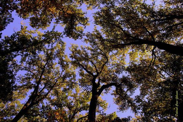Trees Art Print featuring the photograph Trees Conversing by Deborah Crew-Johnson