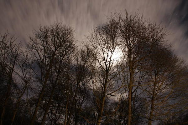 Night Time View Of The Trees Art Print featuring the photograph Trees In The Nigh by Gillian Lovett