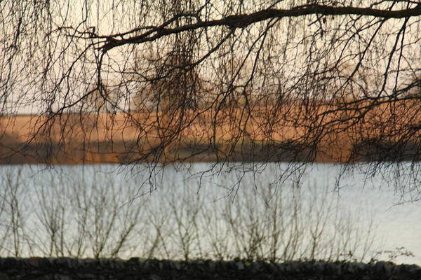 Trees Caught With A Reflection Over A Lake Art Print featuring the photograph Trees With A Reflection by Gillian Lovett