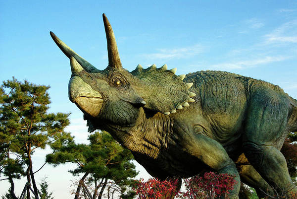 South Korea Art Print featuring the photograph Triceratops by Michele Burgess