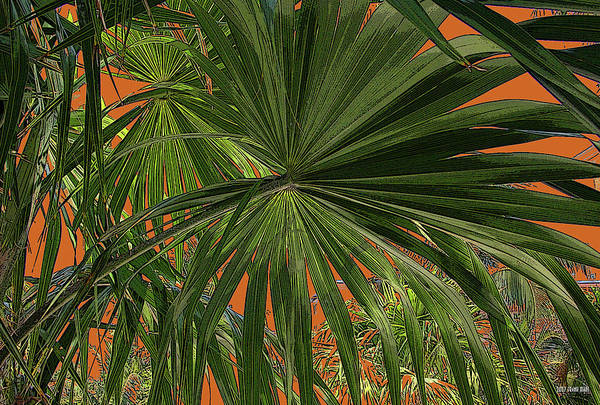 Key West Art Print featuring the photograph Tropical Palms 1 by Frank Mari