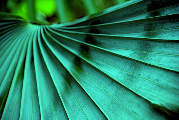 Silver Palm Leaf Art Print featuring the photograph Tropical Wings by Susanne Van Hulst