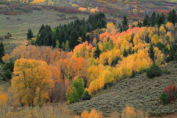 Colorado Fall Art Print featuring the photograph True Nature by Tim Reaves