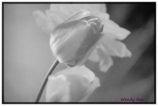 Tulip Art Print featuring the photograph Tulip Black N White by Wendy Fox