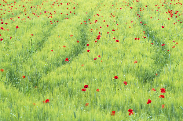 Agriculture Art Print featuring the photograph Tuscan Monet by Eggers Photography