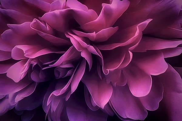 Flower Art Print featuring the photograph Twilight Breeze by Darlene Kwiatkowski