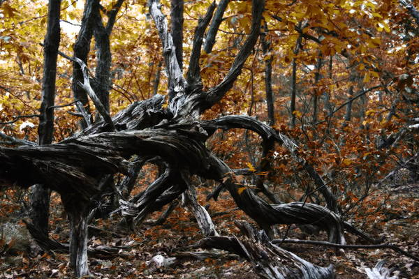 Wood Art Print featuring the photograph Twisted by Alan Skonieczny
