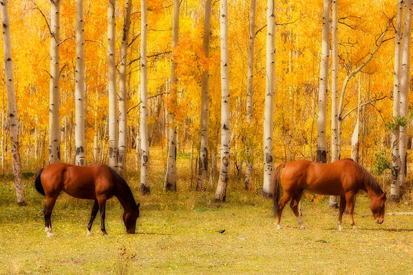 Autumn Art Print featuring the photograph Two Horses In The Colorado Fall Foliage by James BO Insogna