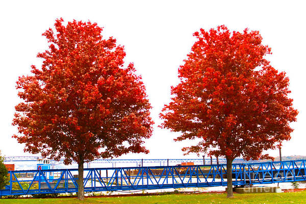 Newburgh Art Print featuring the photograph Two Red Trees by Victory Designs