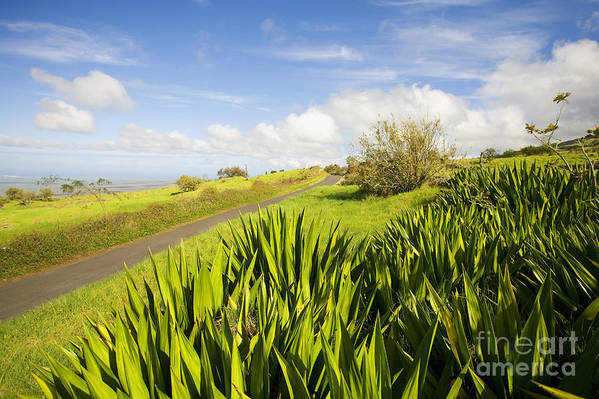 Afternoon Print featuring the photograph Ulupalakua Country Road by Ron Dahlquist - Printscapes
