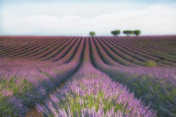 Landscape Art Print featuring the photograph Velours De Lavender by Margarita Chernilova