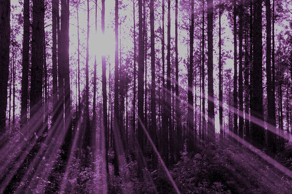 Violet Art Print featuring the photograph Violet Rays by Tina Meador