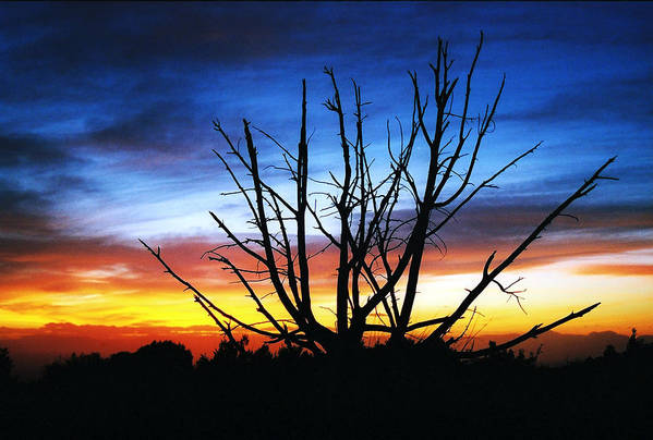 Sunset Art Print featuring the photograph Virden Road Sunset by Brenda Purvis