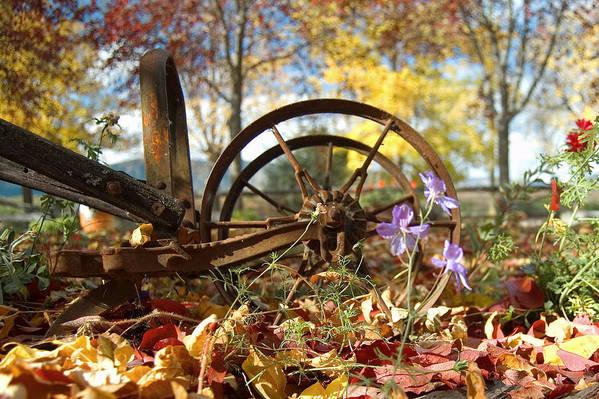 Wagon Wheel Art Print featuring the photograph Wagon Wheel by Peter Olsen