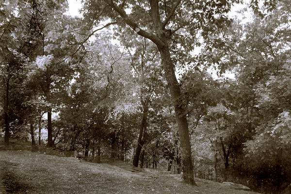 Woods Art Print featuring the photograph Walk In The Woods by Nina Fosdick