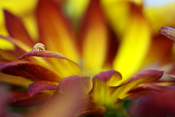 Water Drop Art Print featuring the photograph Water Drop by Andreas Freund