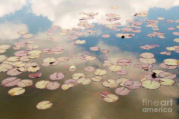 Nature Art Print featuring the photograph Water Lilies In Schoenbrunn Vienna Austria by Julia Hiebaum