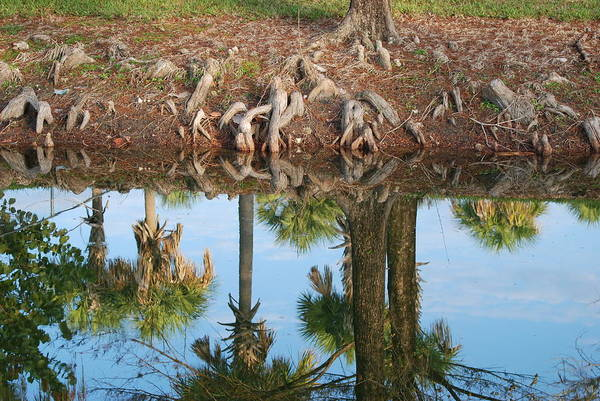Roots Art Print featuring the photograph Water Reflections by Rob Hans