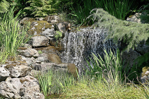 Pond Art Print featuring the photograph Waterfall And Pond by Liz Santie