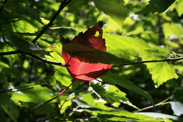 Foliage Art Print featuring the photograph Wealth by Alan Rutherford