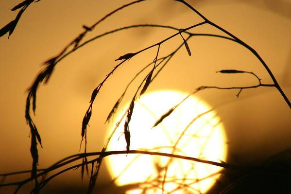 Sun Art Print featuring the photograph Weeds In The Sun by Kerry Reed