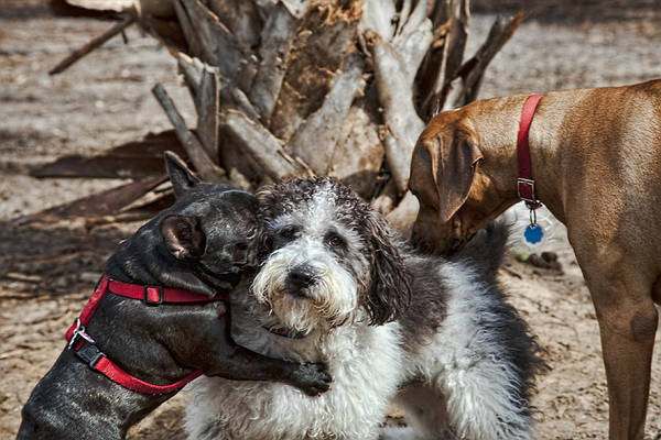 Dogs Art Print featuring the photograph Welcome Wagon by Bill Linhares