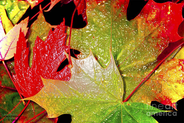 Leaves Art Print featuring the photograph Wet Leaves Of Fall by Larry Keahey