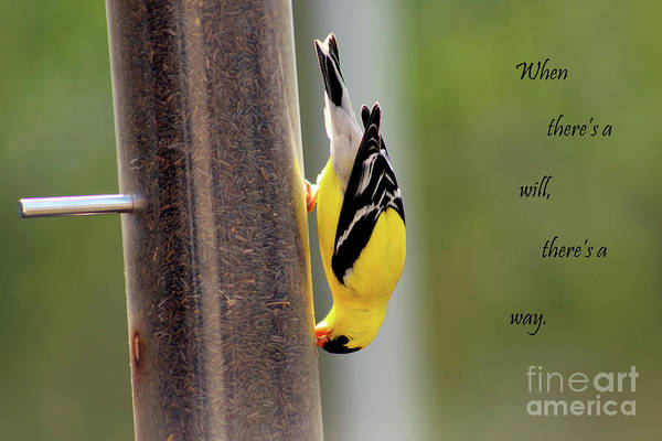 Bird Art Print featuring the photograph When There's A Will... by Douglas Milligan