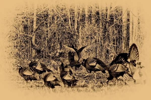 Wild Turkey Art Print featuring the photograph Wild Turkeys by Bill Cannon