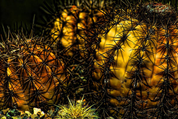Cactus Art Print featuring the photograph Will Bite by Joetta West