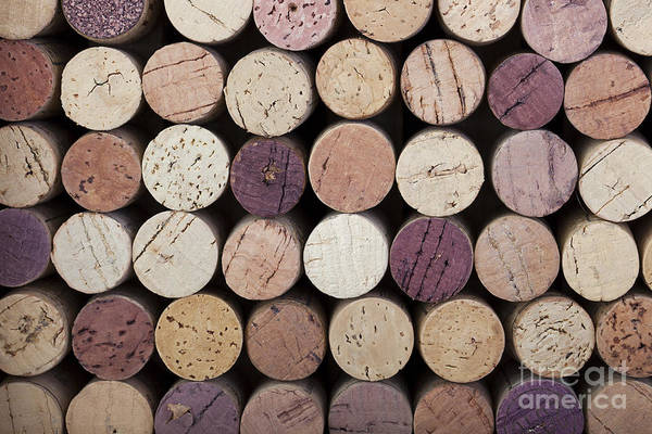 Alcohol Art Print featuring the photograph Wine Corks by Jane Rix