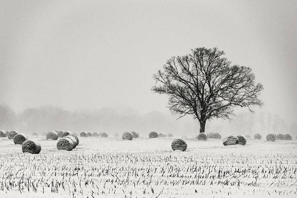 Winter Art Print featuring the photograph Winter Field by Jessica Michaels