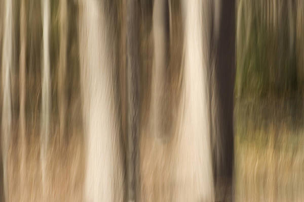 Abstract Art Print featuring the photograph Winter Grove by Margaret Denny