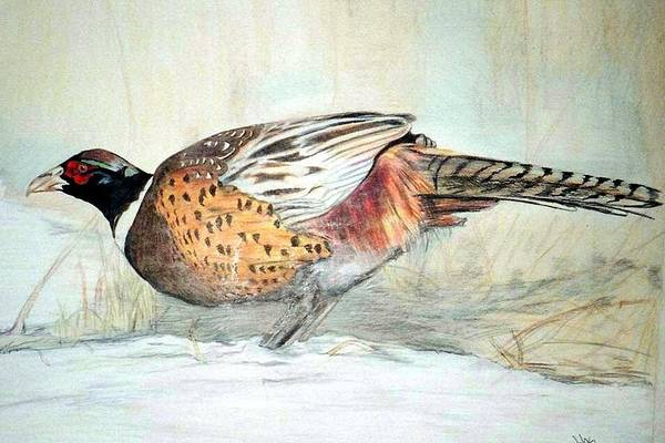 Ringneck Pheasant Art Print featuring the painting Winter Ringneck by Debra Sandstrom