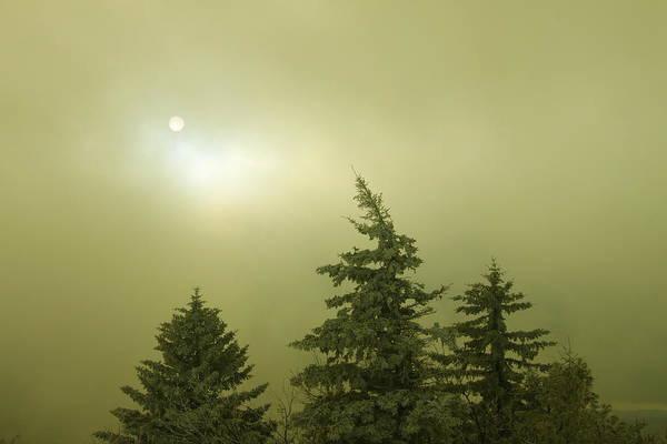 Spruce Art Print featuring the photograph Winter Sky by John Burk