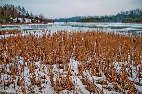 Winter Art Print featuring the photograph Winter Swamp by Sherri Cavalier