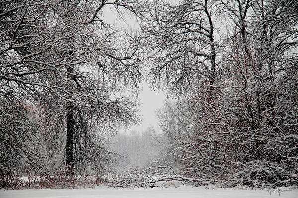 Winter Art Print featuring the photograph Winter Wonderland II by Nancy Coelho