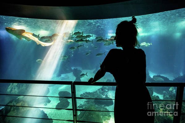 Underwater Art Print featuring the photograph Woman With Leopard Shark by Benny Marty