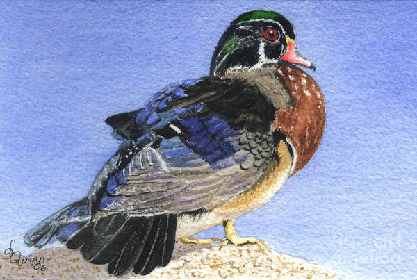 Duck Art Print featuring the painting Wood Duck by Lynn Quinn