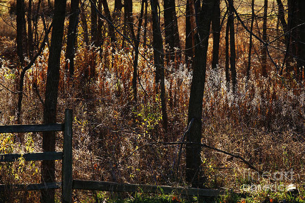 Michigan Art Print featuring the photograph Woods - 2 by Linda Shafer