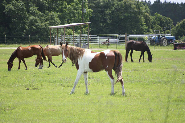 Horses Art Print featuring the photograph Working Farm by Paula Coley
