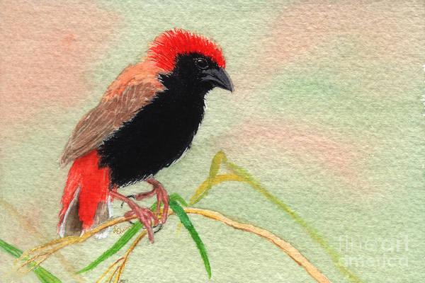 Bird Art Print featuring the painting Zanzibar Red Bishop by Lynn Quinn