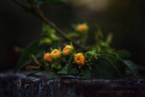 Flowers Art Print featuring the photograph Wildflower Bouquet by Brenda Wilcox aka Wildeyed n Wicked